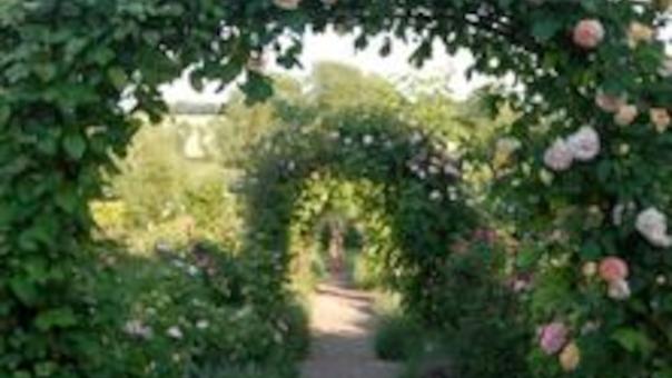 Besøg rosenhaven - kornerupgaards have