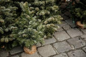 Julemarked i Sognegården