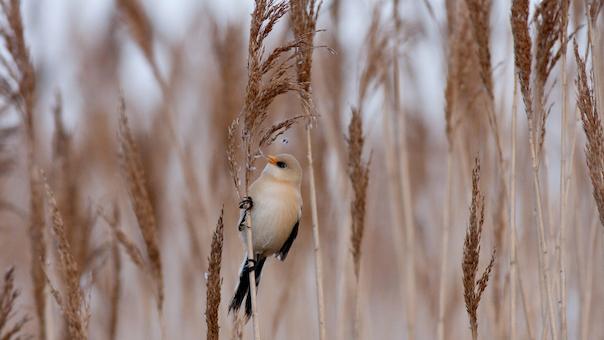 Fugletur ved Gundsømagle Sø