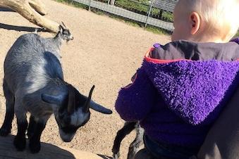 Dyrepasser for en dag i Aalborg Zoo